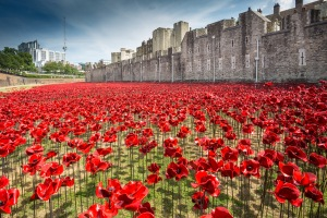 'Blood Swept Lands and Seas of Red' poppy installation at the Tower of London to mark the centenary of the First World War.