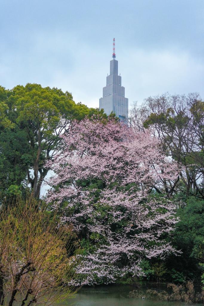 Yoyogi Park Tokyo Shibuya