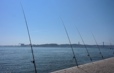 Not sure if the fish were biting, but that's a lot of poles to keep track of!