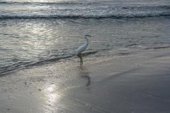 #heron