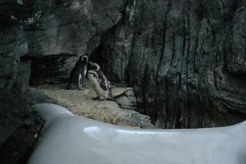 #penguins