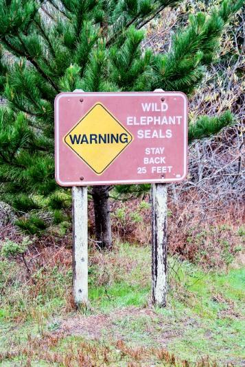 #wildelephantseals