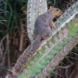 #cactusandsquirel
