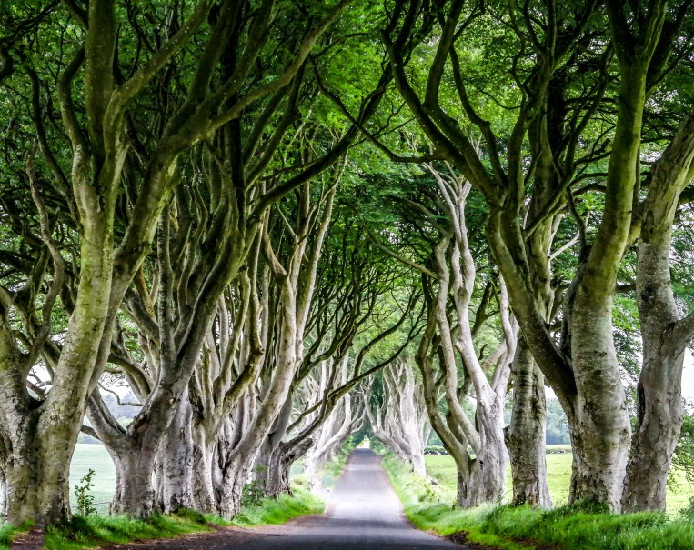 #dark Hedges