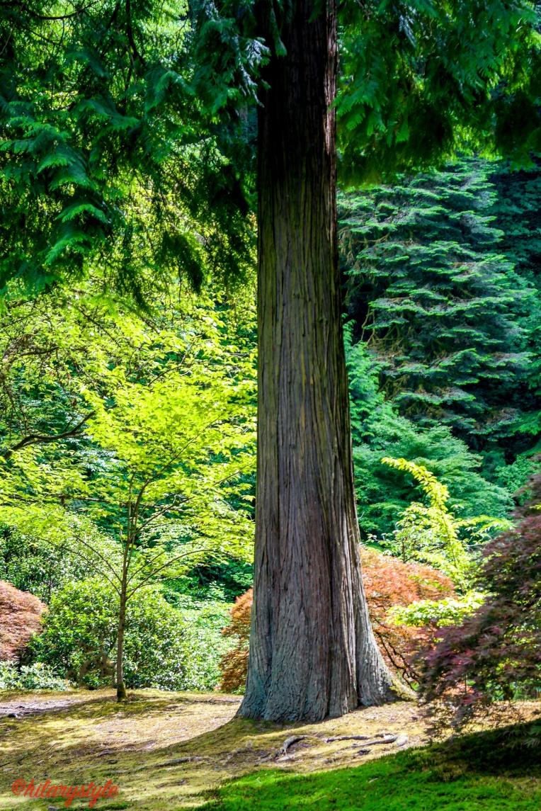 #japanesegarden